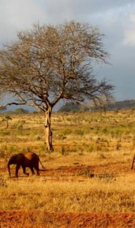 Safari v Tsavo East