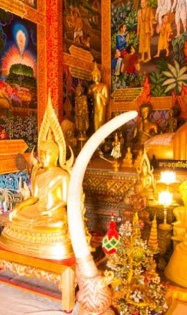 TOP 10 places of northern Thailand