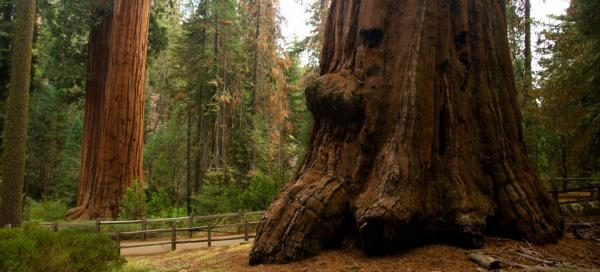 Výlet do Sequoia a Kings Canyons N.P.