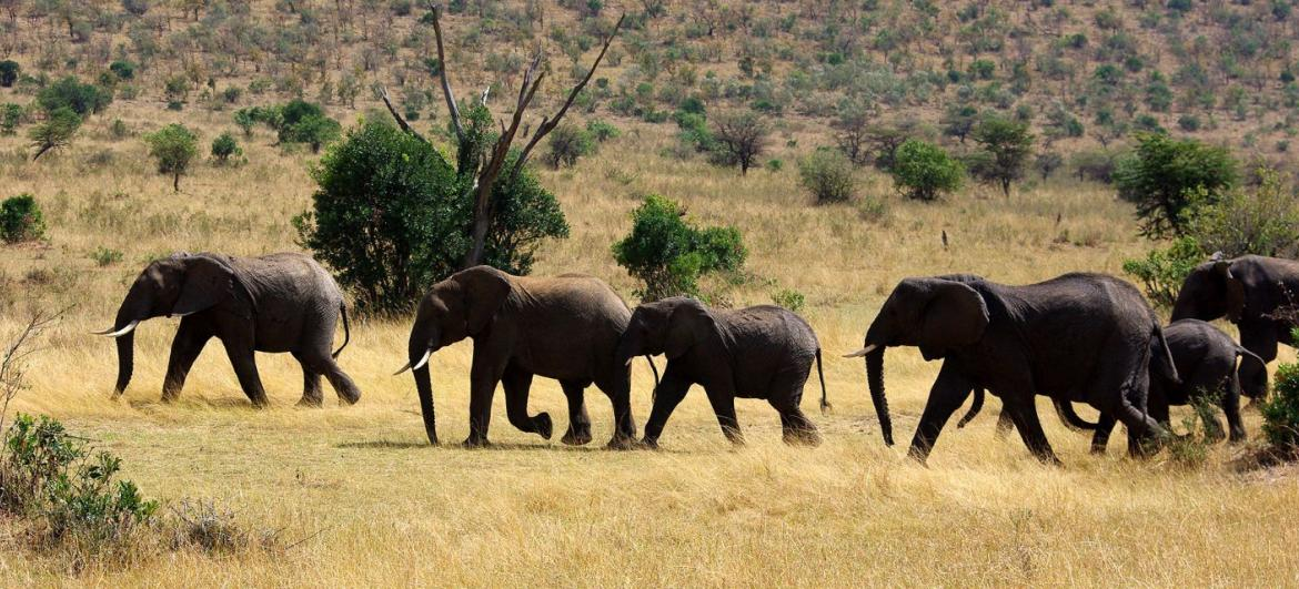 Africa: Weather and season