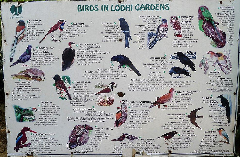 Birds in Lodhi Gardens